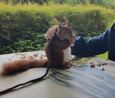 Fra Tintin the squirrels Instagram konto